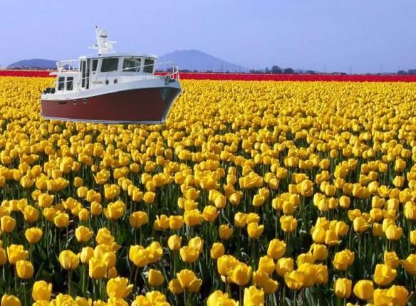 yellow field & at41